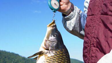 Mejor báscula digital para pesca portatil - Marcas, comparativa y precios