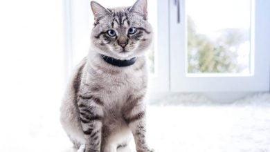 ¿Cómo elegir el mejor collar GPS para gatos?  Guía completa