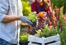 ¿Puedes elegir los mejores guantes de jardinería?  Guía completa y precios