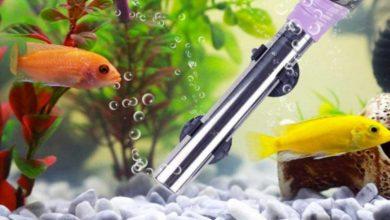 Calentadores de acuario: mejores modelos de inmersión con precios