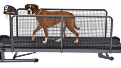 Cinta de correr para perros: Mejores modelos profesionales, opiniones y precios