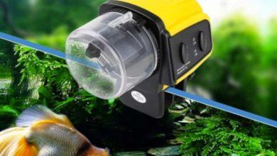 Comederos automáticos de pescado: los 5 mejores dosificadores comparados