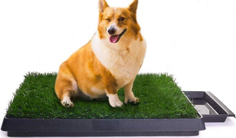 Guía de las mejores cajas de arena para perros: modelos más vendidos con reseñas y precios
