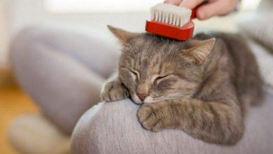 Los mejores cepillos para gatos: ranking y opiniones TOP 5