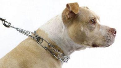 Los mejores collares estranguladores para adiestramiento de perros