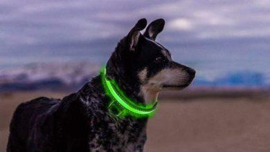 Los mejores collares luminosos para perros. [ Clasificación TOP 5 e opiniones ]