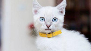 Los mejores collares para gatos: tipos, consejos y reseñas