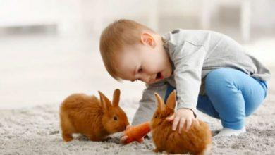 Los mejores juegos de conejos: Reseñas de los 5 modelos más divertidos