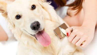 mejor cepillo cardador para perros: análisis de modelos, ofertas y opiniones