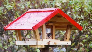 Mejor comedero para pájaros: ¿Qué modelo elegir? [ Guía con opiniones ]