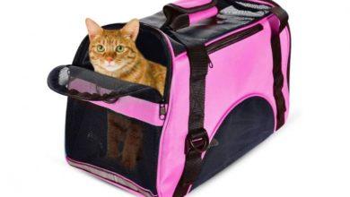 Mejores transportines para gatos: Reseñas y precios de los 5 modelos más comprados