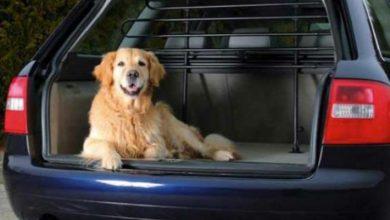 Parrillas para autos para perros: ¿Cuál elegir?  ¿Cómo se ensamblan?  5 modelos comparados