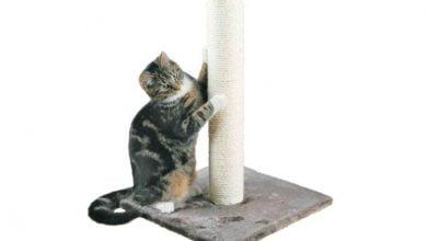 Poste rascador para gatos: ¿Cuál es el mejor modelo?  Reseñas y ofertas