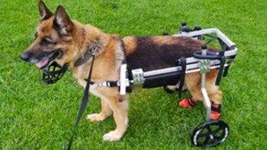 Ranking de los 5 mejores carritos para perros discapacitados [ guía de compra ]
