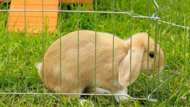 Recinto para conejos: Los 5 mejores modelos calidad / precio [ Clasificación 2021 ]