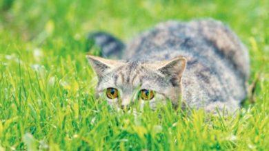 Repelentes para gatos: los mejores bolardos ultrasónicos del mercado