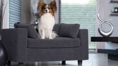 Sofá para perros: Los 5 mejores modelos calidad / precio con opiniones